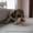 щенки бигль,  с  родословной КСУ- #581154