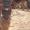 Щенки Немецкой овчарки в г.Луцке - Изображение #5, Объявление #315579