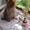Вязка - йоркширский терьер #221854