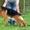 Питомник немецкой овчарки «ABIDOS» продает щенков #1039926