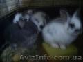 Кролики баранчики и прямоухие
